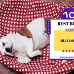 What Beds Fluffy Use? | 10 Best Beds For Bulldogs