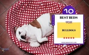 Best Beds For Bulldogs - Featured Image