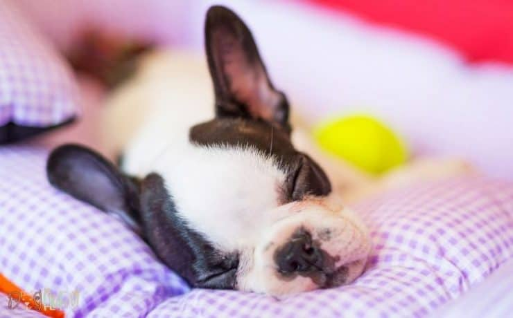 best beds for french bulldogs