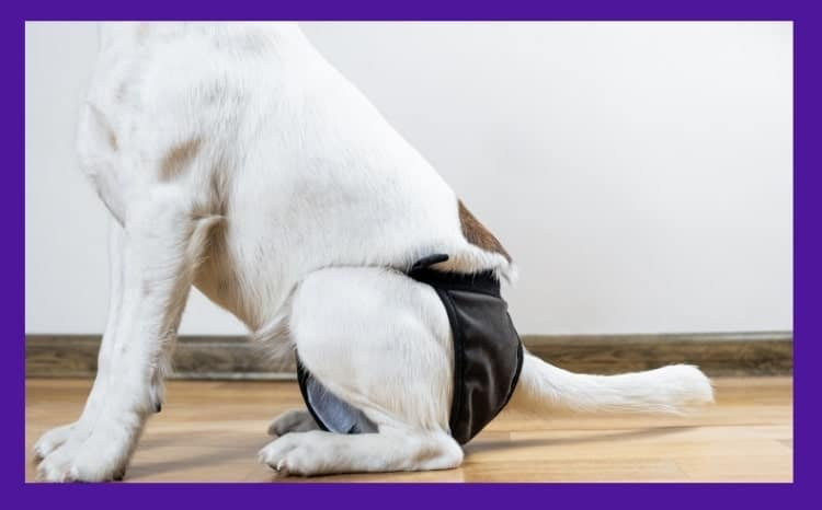 diapers for dogs in heat
