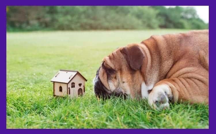 dog house for bulldog outside