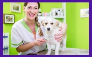 flea treatment for bulldogs What to look for before going for flea medication