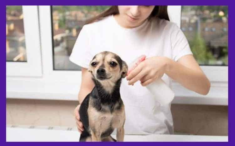 flea treatment for bulldogs