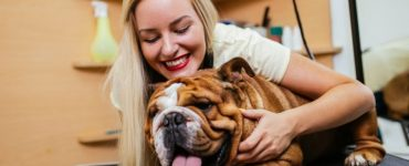 how did bulldogs get flat noses featured image