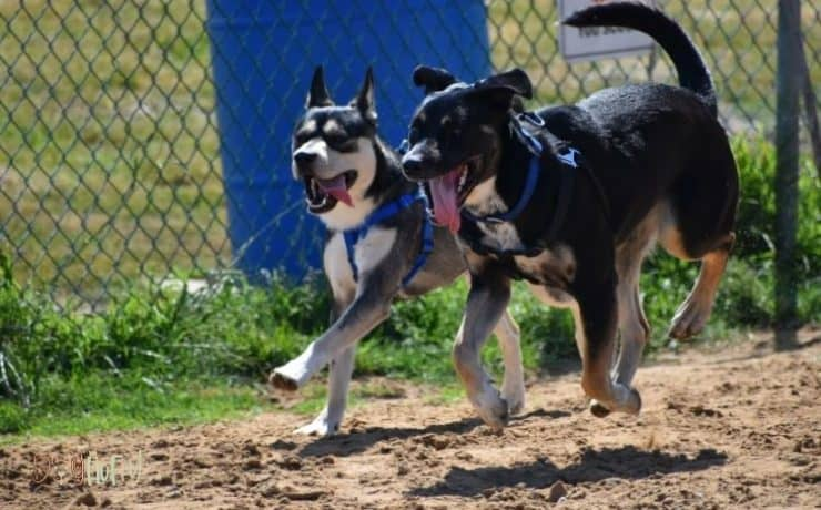 what to put on the ground in a dog run