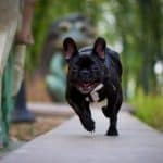 7 Best Different Types Of What To Put On The Ground In A Dog Run