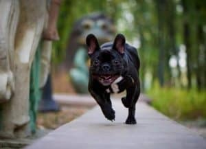 what to put on the ground in a dog run 400px
