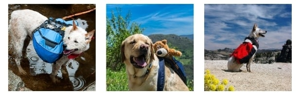 Backpacks For Dogs image
