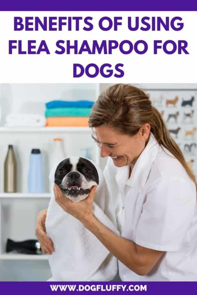 Benefits Of Using Flea Shampoo For Dogs