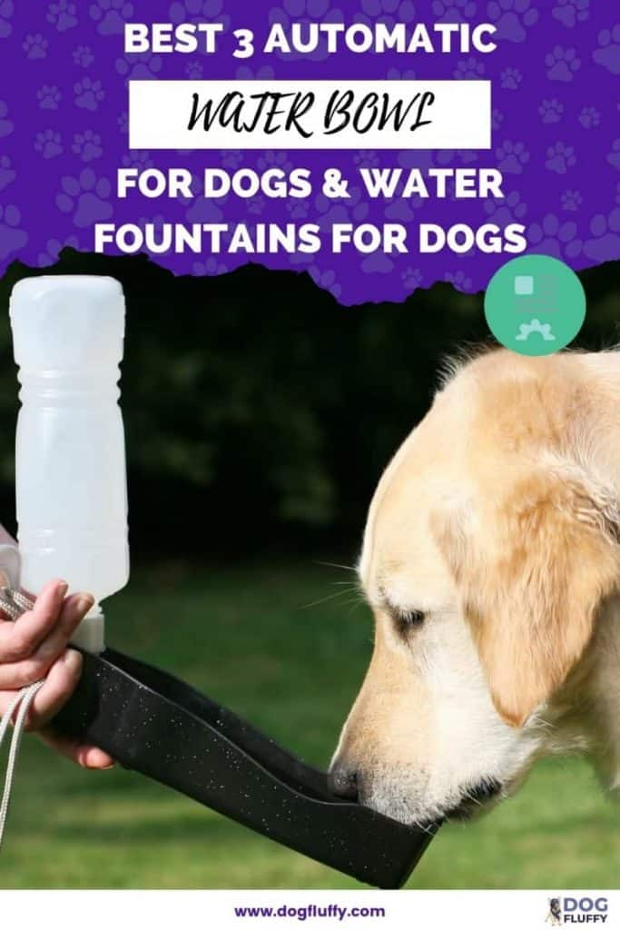 Best 3 Automatic Water Bowl For Dogs & Water Fountains For Dogs