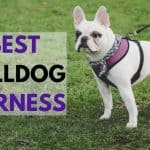 3 Best Bulldog Harness