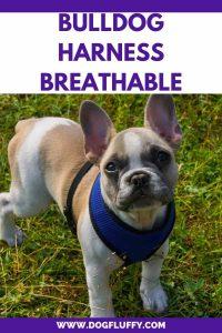 Best Bulldog Harness PInterest Image