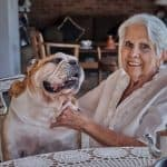 The 4 Best Food For Senior Bulldog With Sensitive Digestions