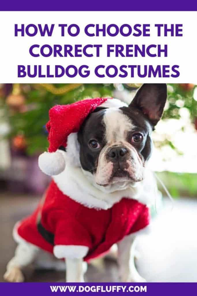 Choose The Correct French Bulldog Costumes