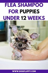 Conduce flea shampoo for puppies under 12 weeks