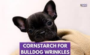 Cornstarch For Bulldog Wrinkles