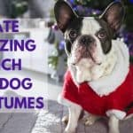Create Amazing French Bulldog Costumes | Best For 2020 Holiday