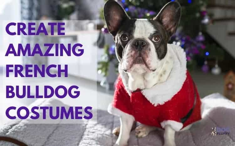 Create Amazing French Bulldog Costumes Best For Holiday