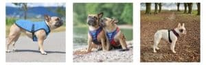 Different Types of Best Bulldog Harness to Choose From