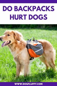 Do Backpacks Hurt Dogs