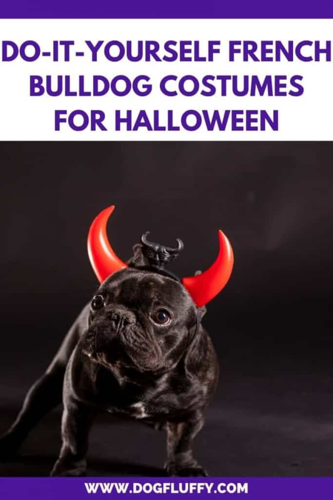 Do-It-Yourself French Bulldog Costumes For Halloween