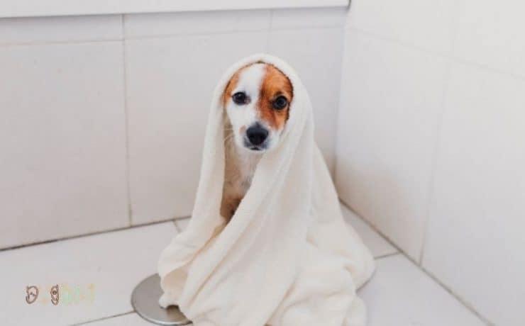 Dog Bath Towel Wrap Featured Image