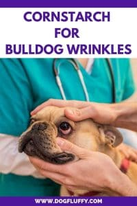 Eye Infection and Skin Irritations in Bulldogs