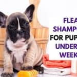Flea Shampoo For Puppies Under 12 Weeks | Best 3 Readers Choice