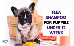 Flea Shampoo For Puppies Under 12 Weeks featured image