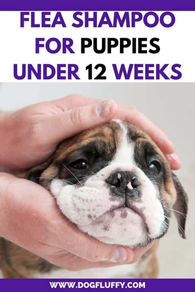 Flea Shampoo for Puppies Under 12 Weeks - Pinterest Image