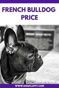 French Bulldog Price – Other Costs