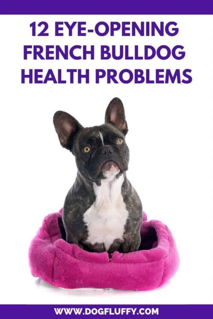 French bulldog health problems pin inside