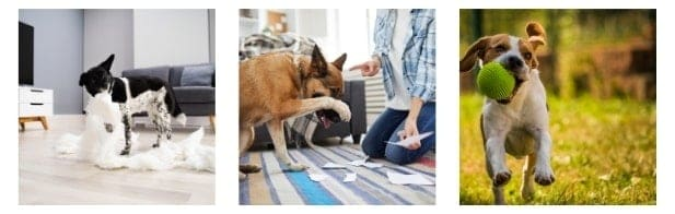 Know the Behavior of Your Pet