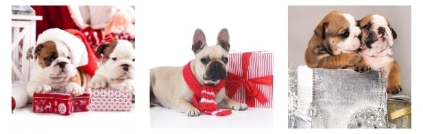 List of Unique Bulldog Holiday Gifts