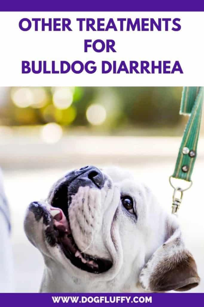 Other Treatments for Bulldog Diarrhea