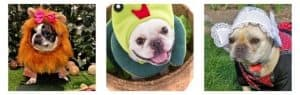 Points to Consider Before Making French Bulldog Costumes