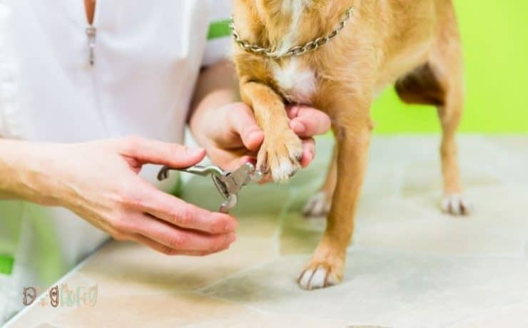 Safari professional nail trimmer for dogs