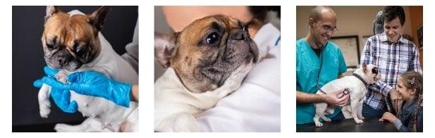 Tests of pet DNA