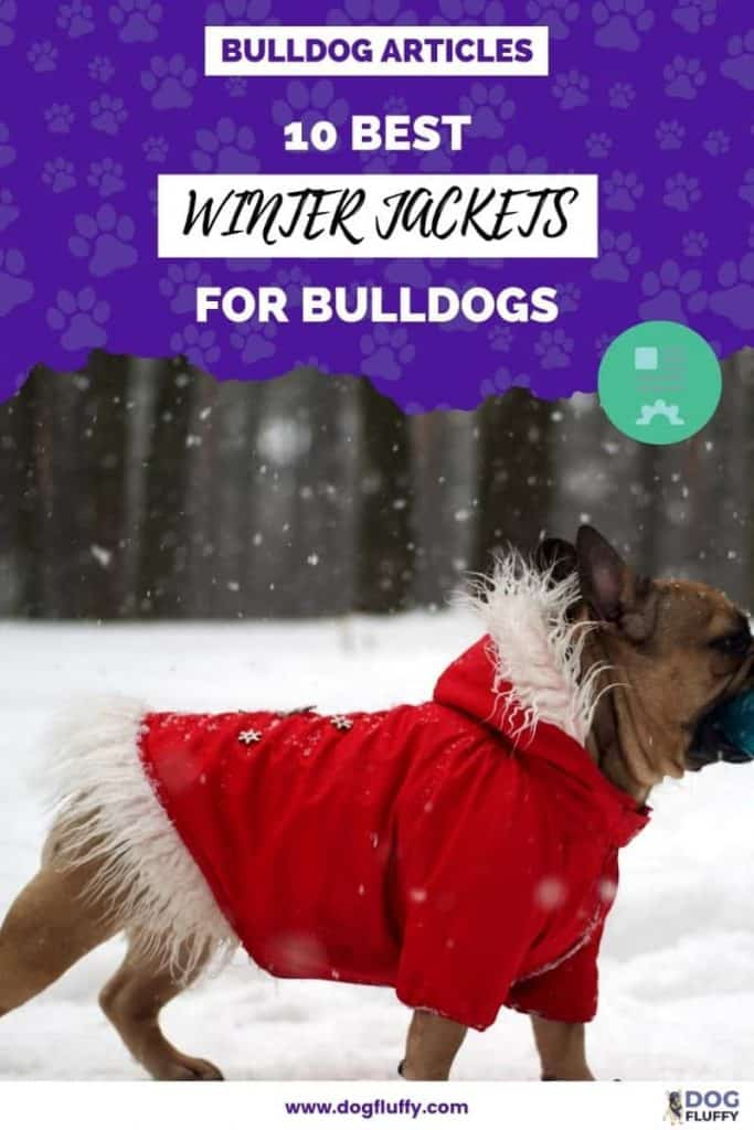 The 10 Best Winter Jackets For Bulldogs PIn Image