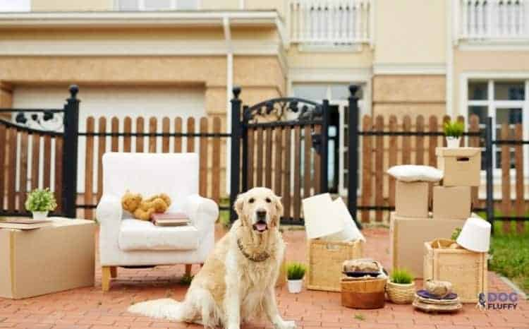 The List And Details Of 20 Most Expensive Luxury Dog House Witnessed