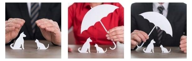 Top 3 Bulldog Insurance Companies