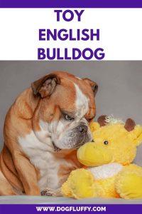Toy English Bulldogs Pinterest