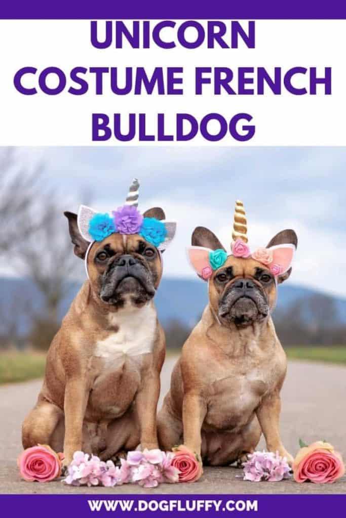 Unicorn Costume french bulldog