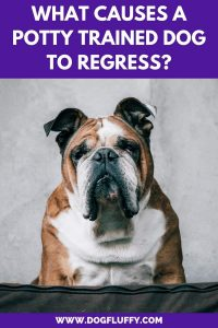 What Causes a Potty Trained Dog to Regress