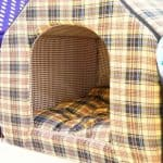 What Is The Warmest Dog House? | Best 5 Warmest Winter Dog House