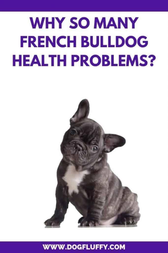Why So Many French Bulldog Health Problems