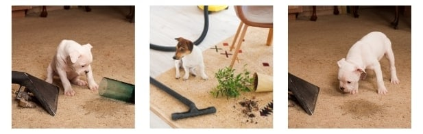 Why do Dog Owners Need Carpet Cleaners