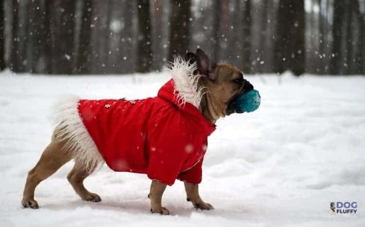 Winter Jackets For Bulldogs