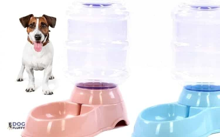 automatic water bowl for dogs