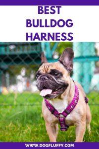 best bulldog harness Pin Main